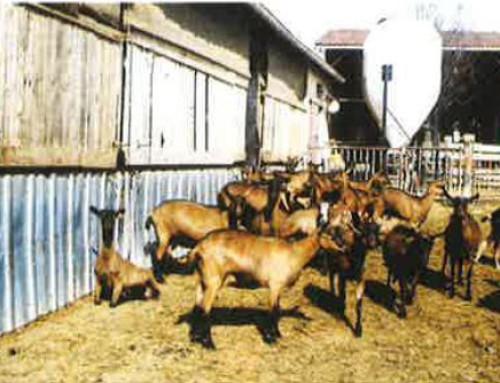 Traitement biologique des effluents de fromagerie